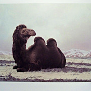 WILL NELSON Wildlife Prints (set of 5) ~ c. 1985