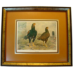 Wonderful Indian Game Chicken  Natural History Print ~ Titled: Indian Game ~ by J. W. Ludlow ~ Professionally Framed & Matted  late 1800's