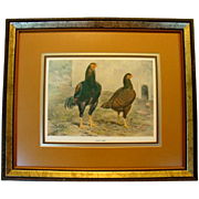 SALE Wonderful Indian Game Chicken  Natural History Print ~ Titled: Indian Game ~ by J. W. Lud