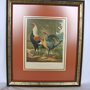 "SALE Awesome Print of Mr. John Douglas's Duckwing Game Fowls ""Sir Harry"" and ""L"