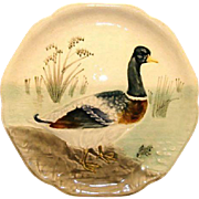 SALE Beautiful Majolica Pottery Cabinet Plate ~ Decorated with a Mallard Duck and Frog ~  H Bo