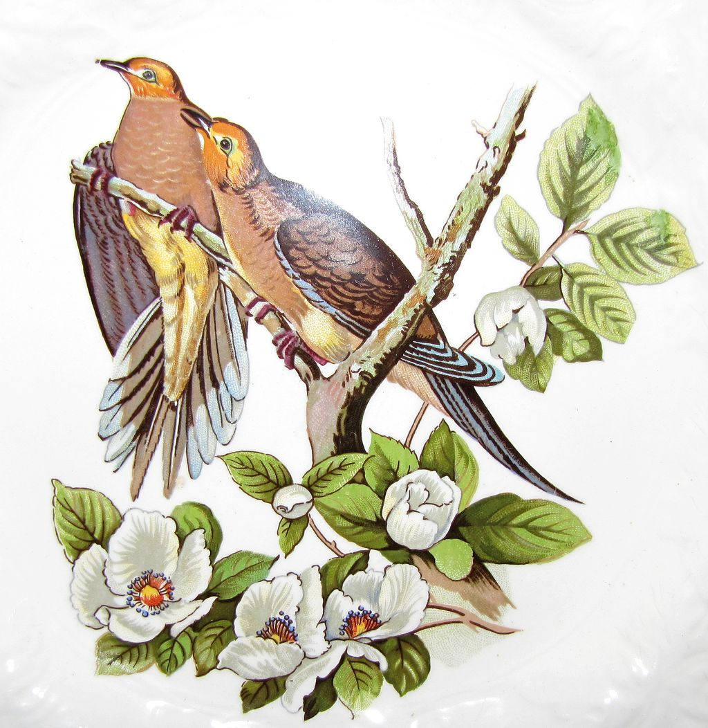 Two turtle doves clipart