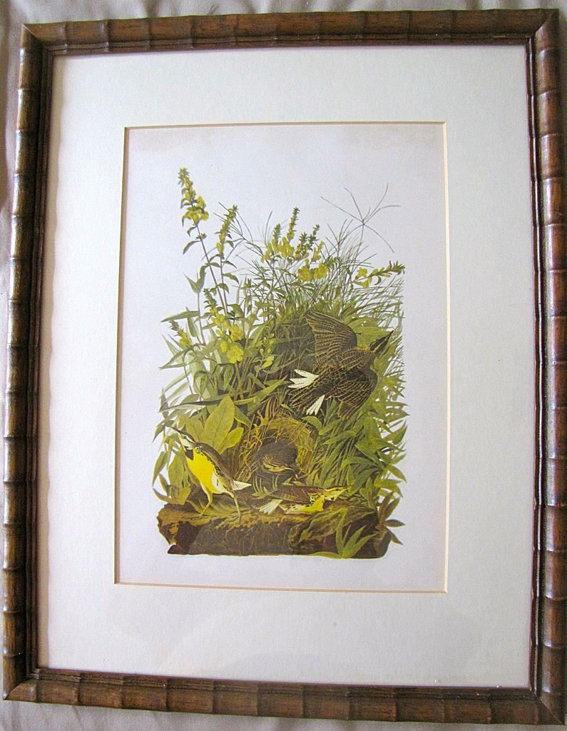 Lovely Framed Audubon Print Meadow Lark