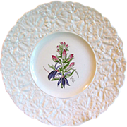 Lovely Royal Cauldon Floral Plate CARDINAL FLOWER, Woodstock Series