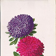 REDUCED Gorgeous Chromolithograph of Asters, Page from Antique Book