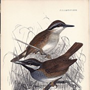 1870 Hand-Finished Color Lithographs John G. Keulemans, PZS