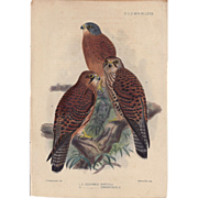 1874 Hand-Finished Color Lithographs John G. Keulemans, PZS