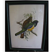 Decorative Vintage Framed Bird Print, TROGON ATRICOLLIS, Gould