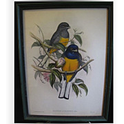 Decorative Vintage Framed Bird Print, TROGON AURANTIUS, Gould