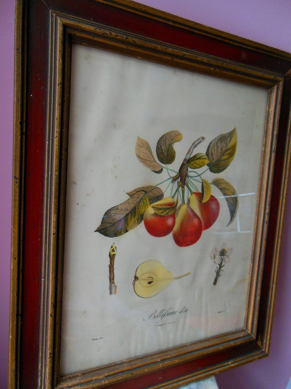 19C French Fruit Botanical Langlois PEAR Engraving