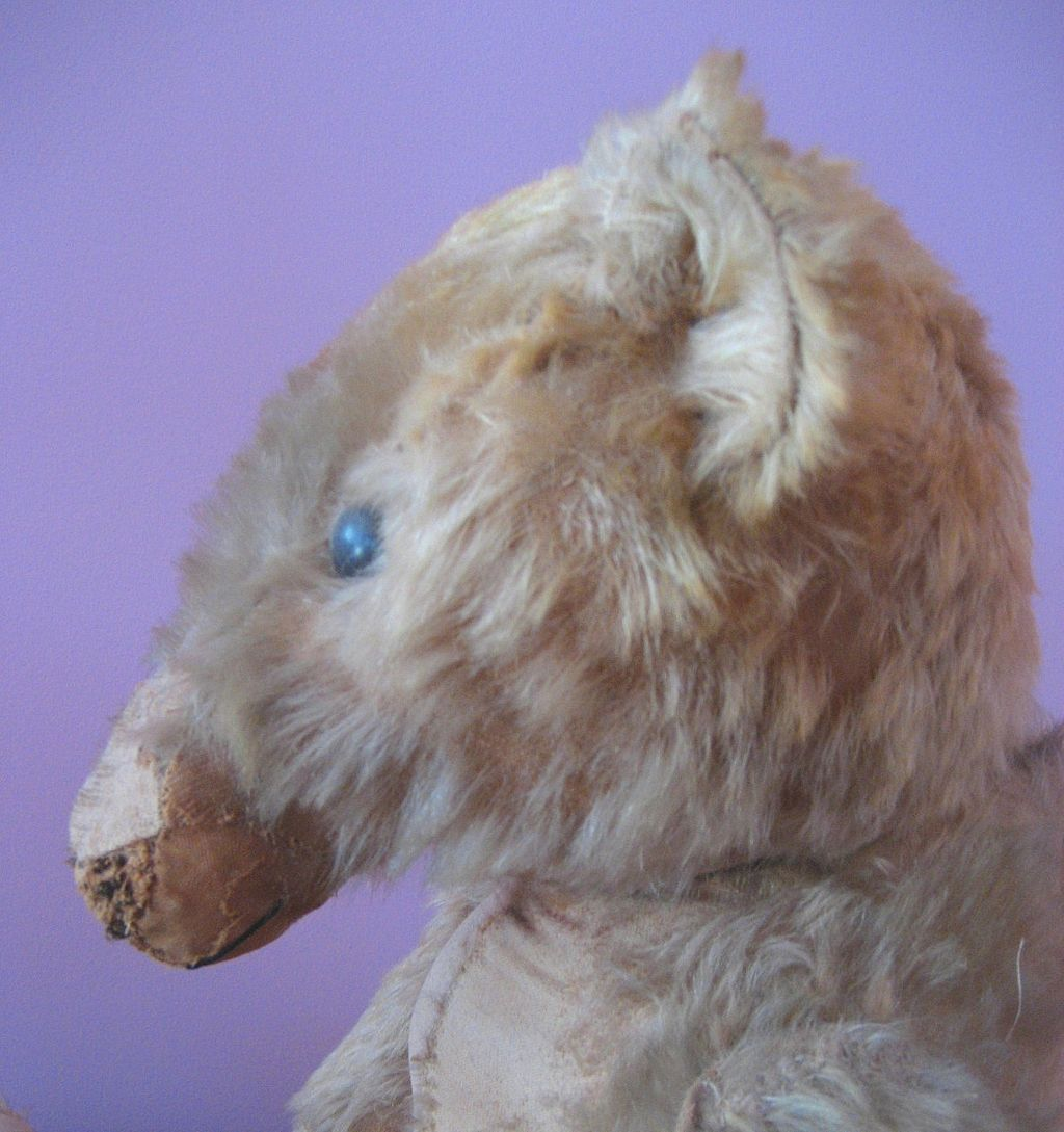 "Rare 1905 30"" Huge Antique Steiff Hump Back Teddy Bear"