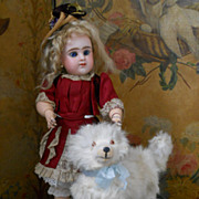 ~~~ Pretty CandyBox Dog for Doll Display ~~~