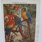 Book Print of Brightly Colored Parrots