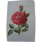 Book Print Single Rose Flower and Buds