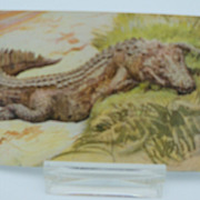 Postcard &quot;A Sleeping Crocodile&quot;  Roosevelt Tours Series