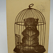 Postcard Cat in a Bird Cage