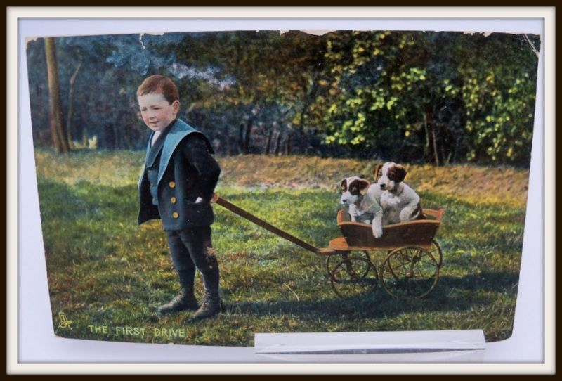 "Tuck's Postcard ""Animal Studies"" Boy Pulling Wagon of Dogs"