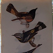 Three Book Prints of Birds