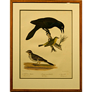 Antique Titian R. Peale Hand Colored Engraving Of Birds