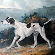 SOLD Mid-19th Century Color Lithograph of a Dog—a Pointer--in a Landscape