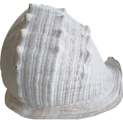 SOLD 1964-Queen Helmet Sea Shell