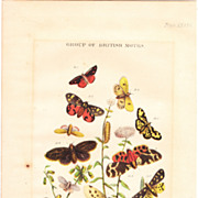 """Victorian Era Color Lithograph""""Group of British Moths"""""""