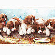 Victorian Tobacco Advertising Trade Card w/Puppies (2 available)