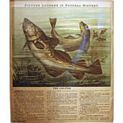 """Huge Antique Framed Folio Page """"Picture Lessons in Natural History"""" Cod Fish ~ c1898"""