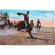 SALE Vintage Cowboy Western Rodeo Calf Riding Postcard