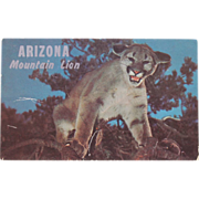 SALE Arizona Mountain Lion Vintage Original Postcard Western Ways Color Tommy Lark