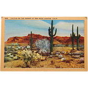 Cactus on the Desert Red Rock California Vintage NOS New Old Stock Postcard