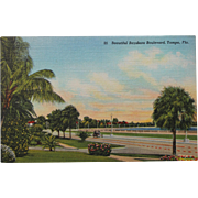 Beautiful Bayshore Boulevard Tampa Florida Vintage NOS New Old Stock Postcard