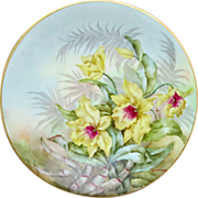 """Limoges H.P. 8 1/2"""" Plate- Yellow Orchids with Pastel Background- artist signed """"Metzer"""