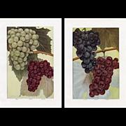 Antique Grape Prints, Pair