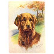 Golden Retriever dog embossed Postcard