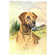Great Dane dog embossed Postcard