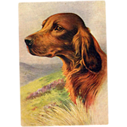 The Irish Setter Red Setter Embossed Postcard