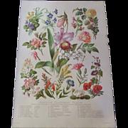 "Familiar Flowering Plants Chromo Lithograph Print 1900  12"" x 8. 1/2"""