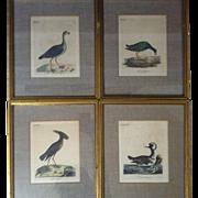 SOLD Four Original John Latham Bird Engravings