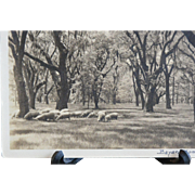 REDUCED Bayard Wootten Grazing Sheep Signed Silver Gelatin Photograph