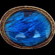 Oval Czech Butterfly Wing Pin