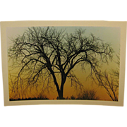 SALE Vintage 1971 DANIEL FARBER 'Elm Silhouette' Tree at Sunset Photograph - Listed Trial Prin