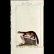 1789 Comte de BUFFON'S Histoire Naturelle,  4 1/2 X 7 1/4 IN ...