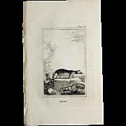 1812 Comte de BUFFON'S Histoire Naturelle,   4 1/2 X 7 1/4 IN ...