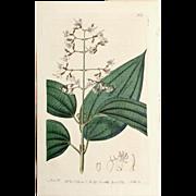 3 Original  Ridgeway Botanical Engravings