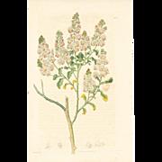 3 Original  Ridgeway Botanical Engravings #4