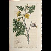 3 Original  Ridgeway Botanical Engravings #5