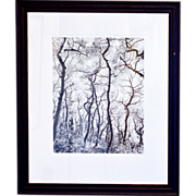 "SALE Framed Photograph, ""Wiggles"" by J. D. Marston"