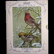 Vintage 1960's Ideals Gallery Litho-Prints Set of 4 Birds (Joan Beringer) Adorable Never Use