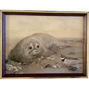 "Rita Parsons ""Orphan"" Giclee on Canvas Framed of a Lonely Baby Seal Animal Picture"